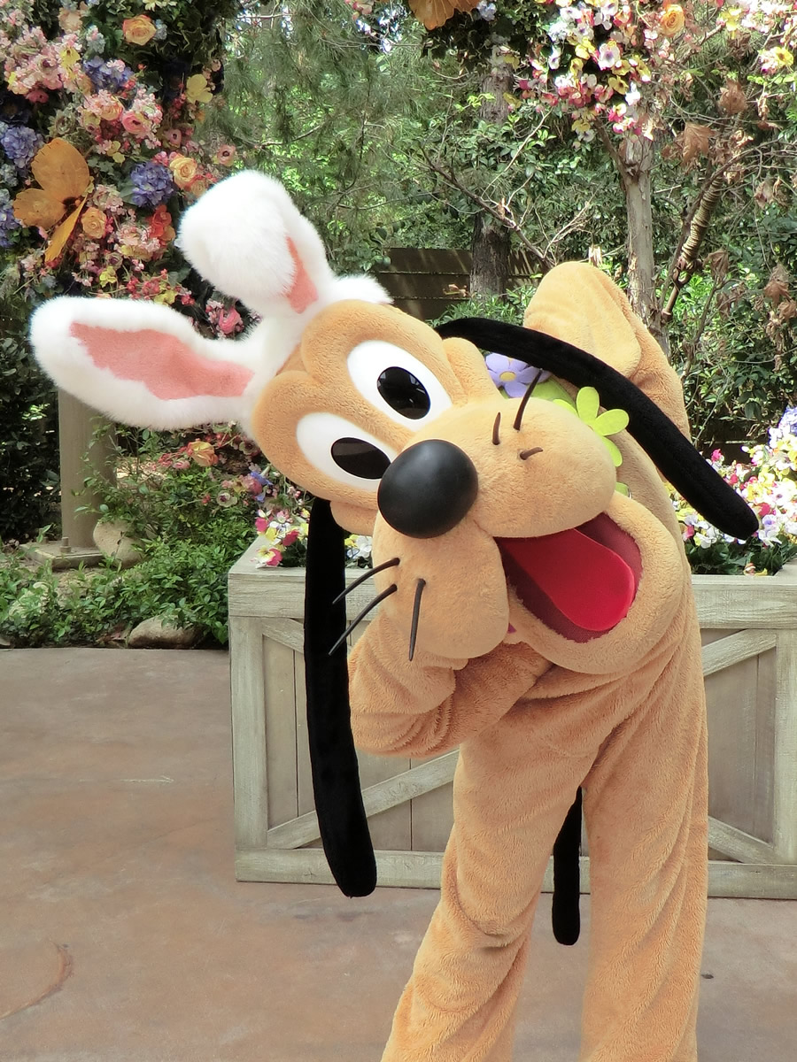 Pluto Shows Off His Easter Bunny Ears At Disneylands Springtime Roundup Photo By Adrienne Vincent Phoenix