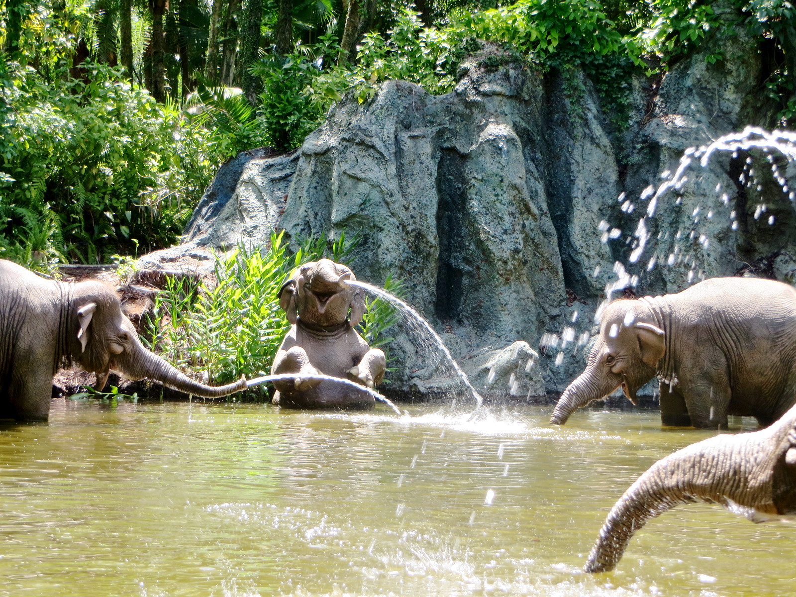 Mouseplanet My Disney Top 5 Things To See In Walt Disney World S Adventureland By Chris Barry