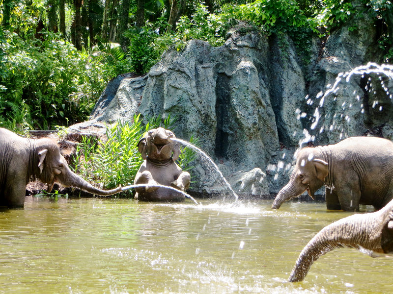 My Disney Top 5 - Things to Love about the Magic Kingdom's Jungle Cruise