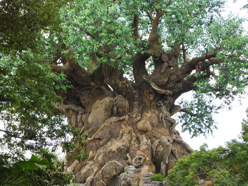 My Disney Top 5 - Animal Kingdom Tips