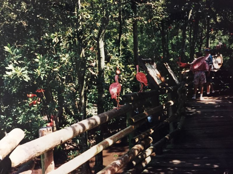 Loving the Outdoors the Disney Way - A Look Back at Discovery Island