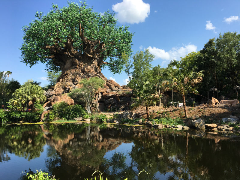 Walt Disney World Resort Update for May 3-9, 2016