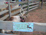 Santa leaves strict orders for the treatment of his reindeer.