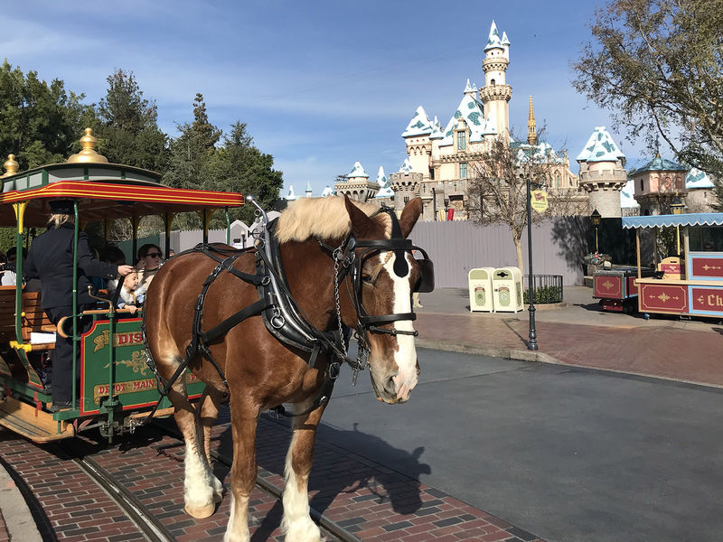 Disneyland Resort Update for January 14 - 20, 2019