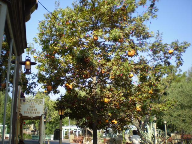 The 'Bradbury Tree' in Frontierland. Photo by Shoshana Lewin.