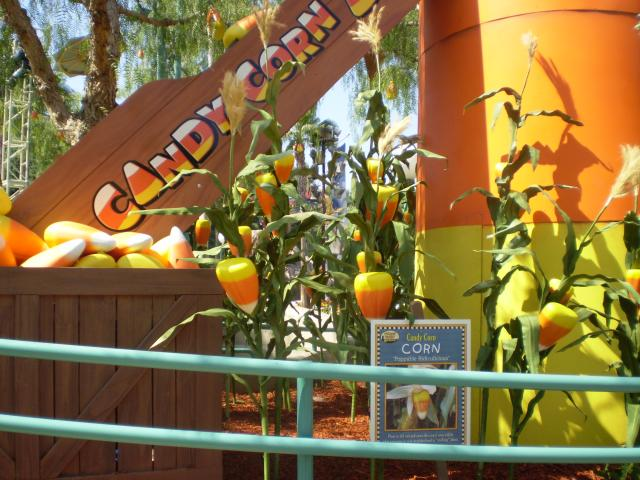 This display at Candy Corn Acres shows how candy corn is grown and harvested. Photo by Shoshana Lewin.